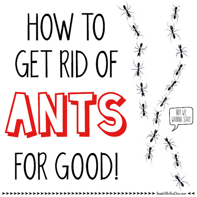 How To Get Rid Of Ants In Bedroom How To Get Rid Of Ants